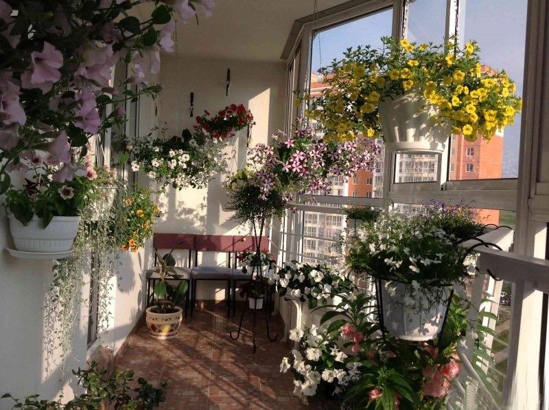 Балконные садики-цветочки записи в рубрике *балконные садики.