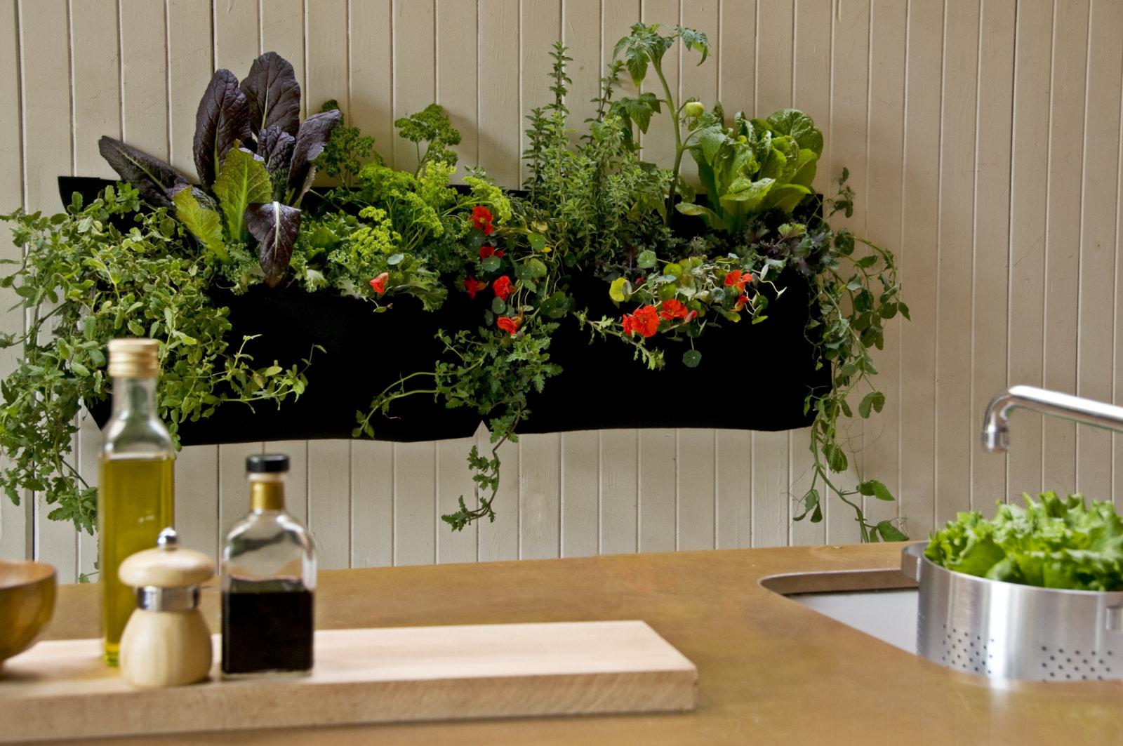 Комнатные цветы в дизайне квартиры фото